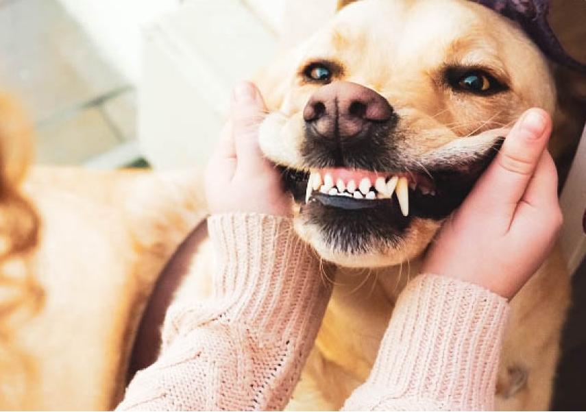 Dog teeth restoration