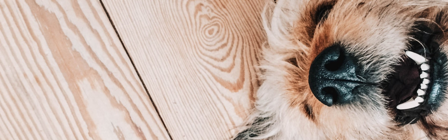 Everything you need to know about dental cleanings for dogs and cats