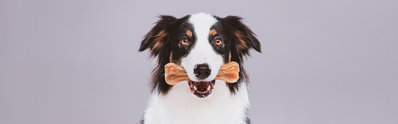 6 Best Dog Dental Chews & Treats