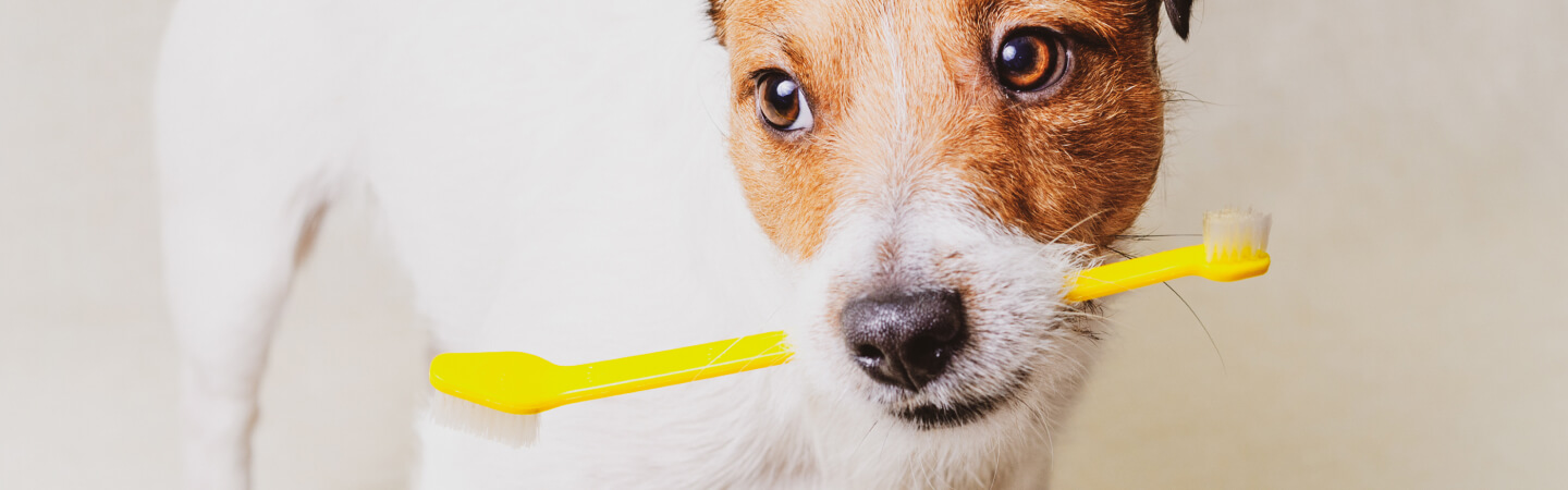 The 5 Best Dog Toothbrushes